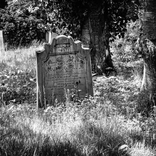 Monochrome (black and white) image of the overgrown graveyard of St Peter's Free Church, Perth Road, Dundee, Scotland. DD052
