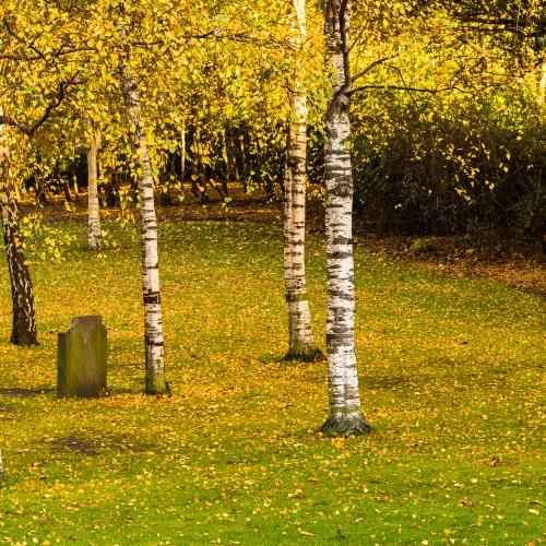 Stand of birch trees surrounding the Robert Louis Stevenson memorial in Princes Street Gardens, Edinburgh, Scotland, United Kingdom.