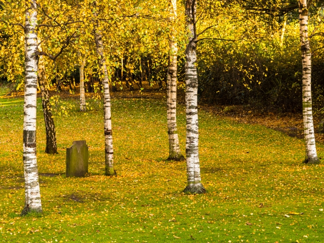Stand of birch trees surrounding the Robert Louis Stevenson memorial in Princes Street Gardens, Edinburgh, Scotland, United Kingdom.