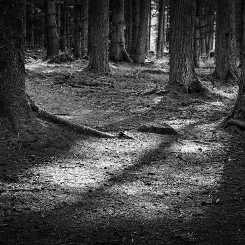 Kinclaven Wood, Perthshire, Scotland.
