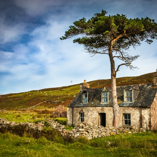 Abandoned croft house and Scots Pine, near Callakille, Applecross, Scotland. AP019
