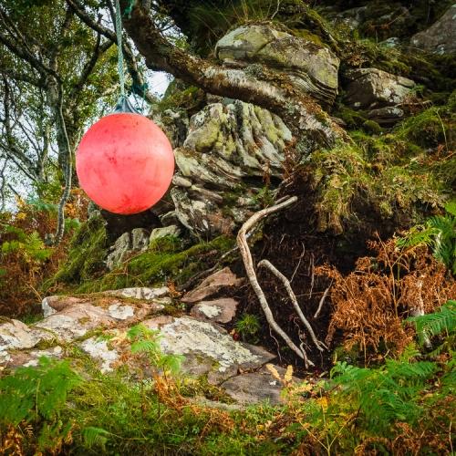 Buoy hung on a tree beside Poll Domhain, Applecross, Scotland. AP024